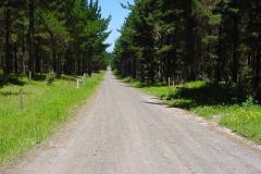 WoodhillForest